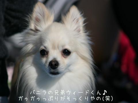 2010_04070367-001.jpg