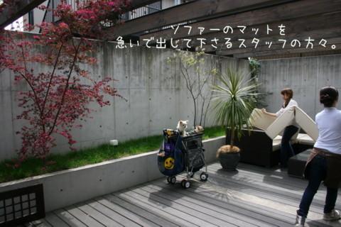 2010_04110007-001.jpg