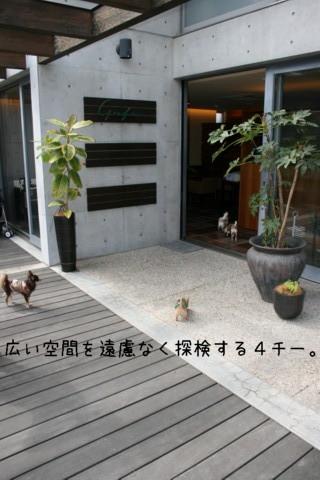 2010_04110015-001.jpg