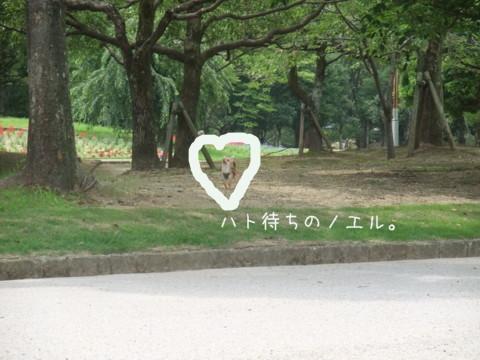 2010_07100021-001.jpg