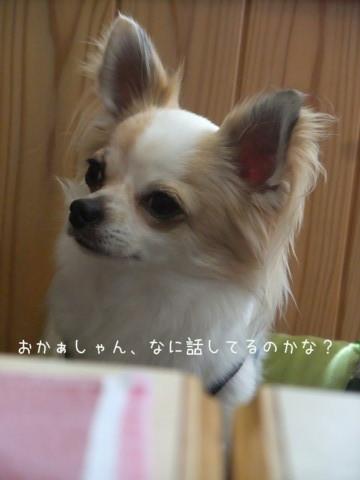 2010_07170057-001.jpg