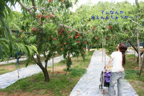 2010_07200544-001.jpg
