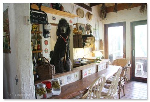 伊豆,一碧湖,犬の家