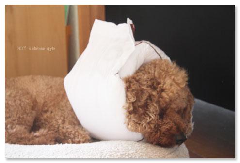 犬,ペット, 手作りエリザベスカラー,クイーンカラー