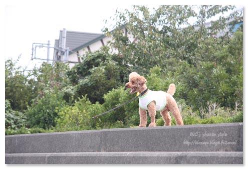 横須賀,公園