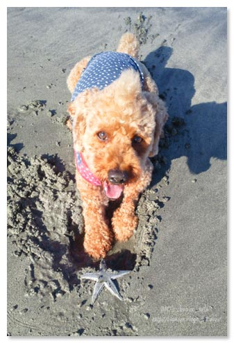 砂浜,散歩
