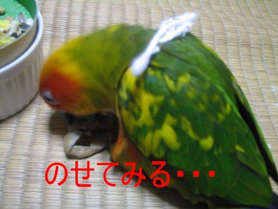 091017_01.jpg