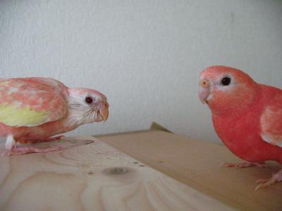 pinkpinkee1006.jpg