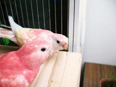 pinkpinkee1008.jpg