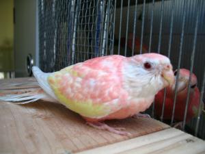 pinkpinkee1016.jpg