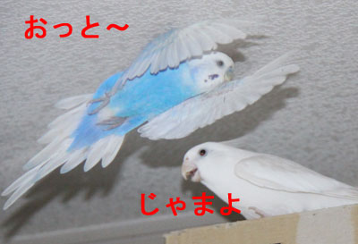 ピヨッチ4