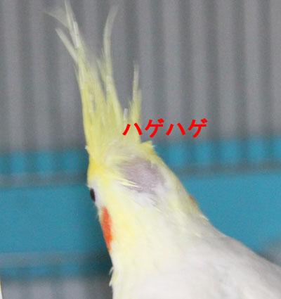 のんちゃん1