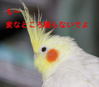 のんちゃん2