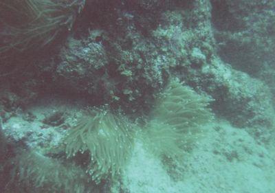 さんご礁1