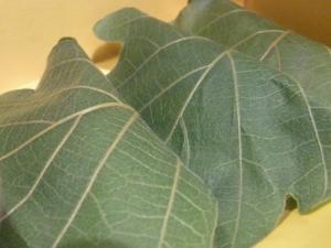 11 5 3kasiwamochi taneya (2)