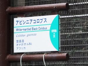 11 7 31abisiniakorobusu (2)