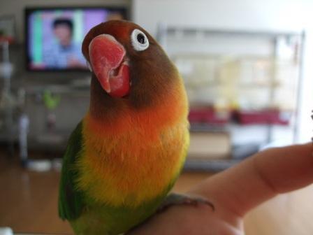 birdbread 008