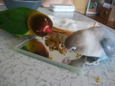 birdbread 010