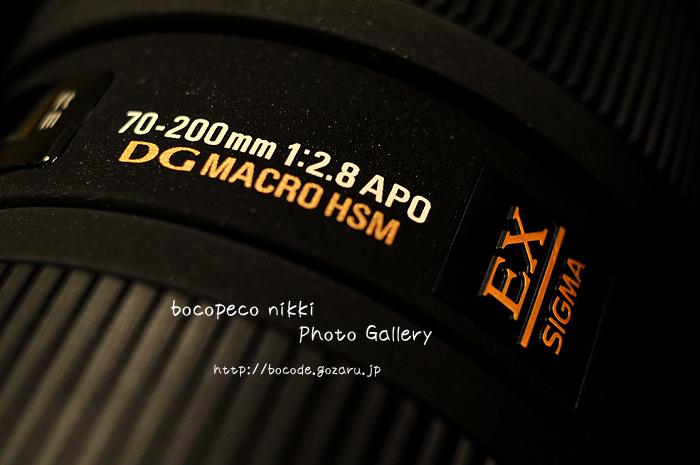 DSD_7231.jpg