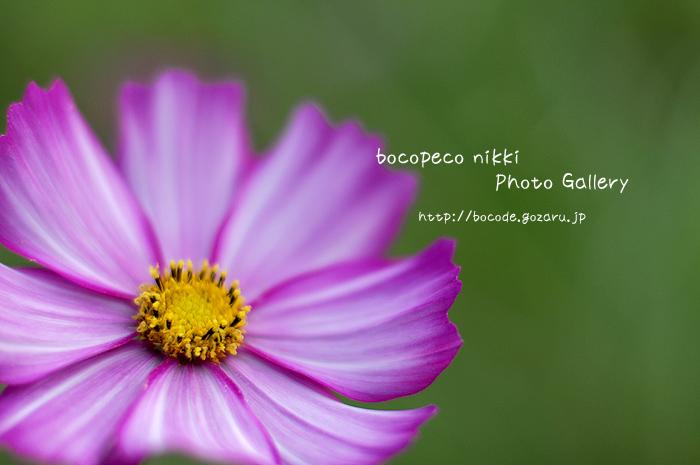 _DSC1101.jpg