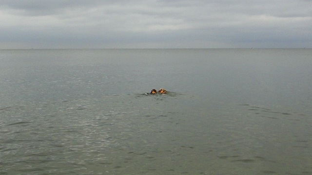20110801swim1.jpg