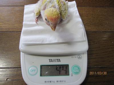 27日目体重測定