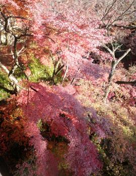 京都の風景nice