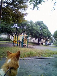 公園もざわざわ。
