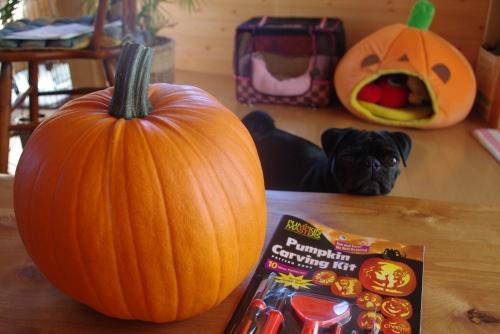 091027かぼちゃ