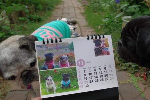 09110511月カレンダー