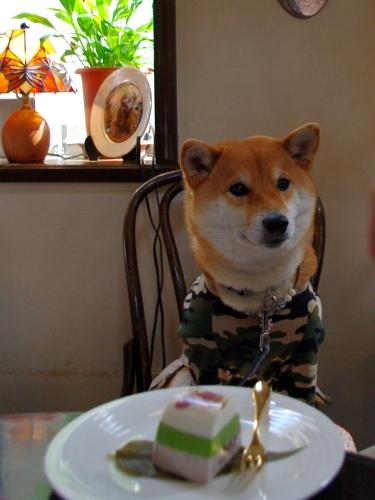 100301花ちゃんとケーキ