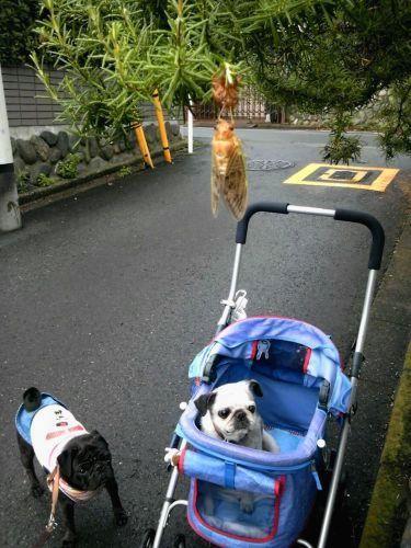 100714今朝のお散歩