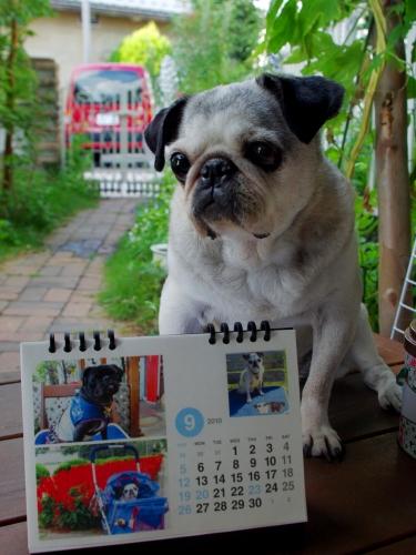 1009019月カレンダー