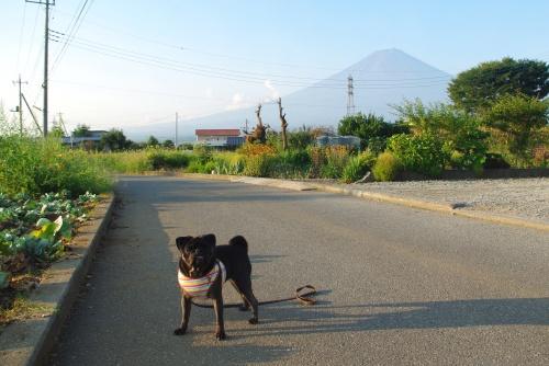 100904朝のお散歩