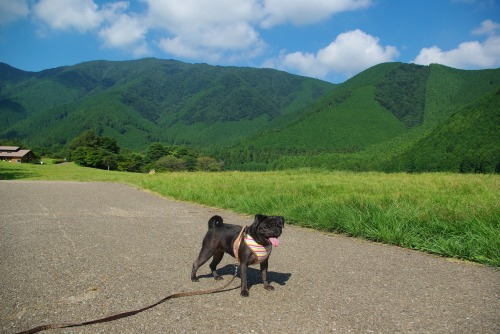 100907田貫湖お散歩