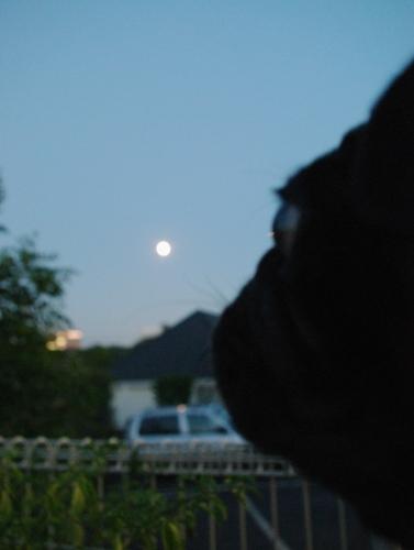 100922中秋の名月