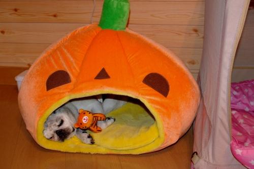 100925かぼちゃ