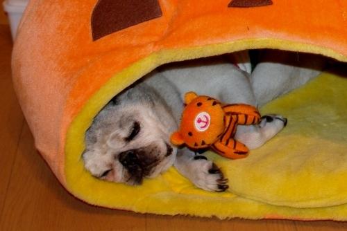 100925かぼちゃ^^