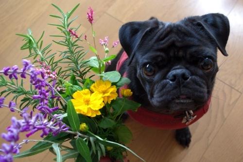 100930お庭のお花