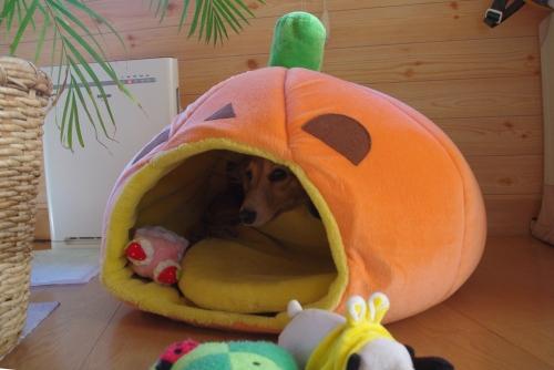 101208かぼちゃ