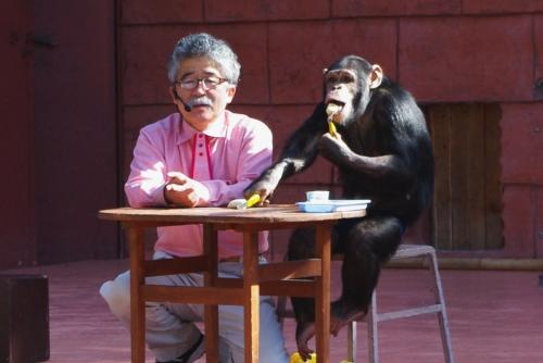 110203チンパンジーくん.