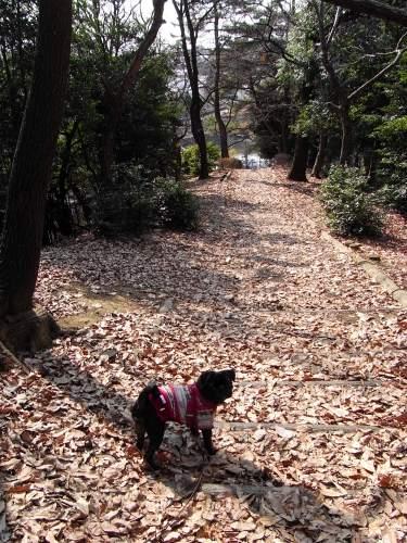 110210落ち葉の道