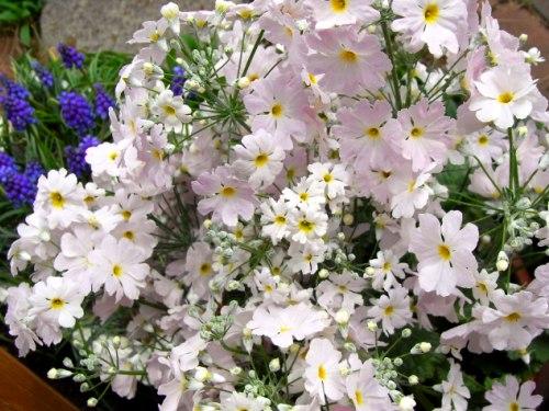110401湖畔の花あかり