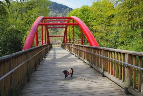110416風の子橋