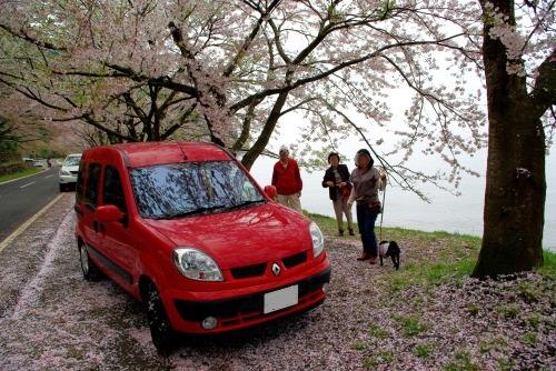 110424桜