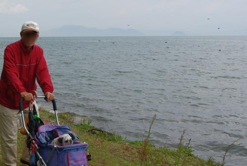 110424琵琶湖,