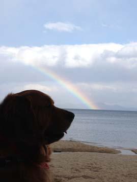 バディと虹