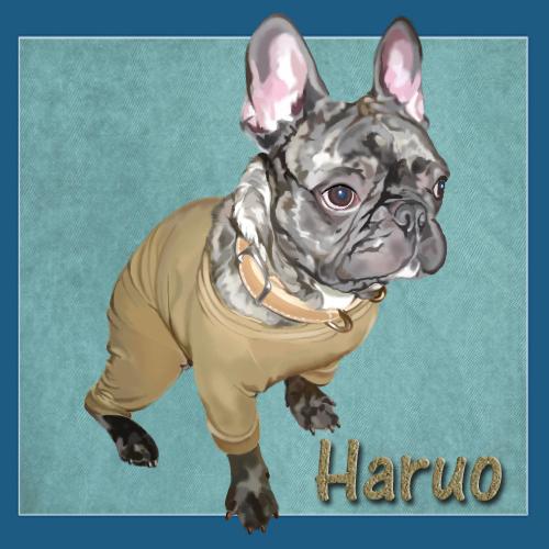 haruo-1-ne.jpg