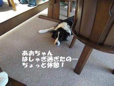 台北2010りえ 077