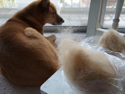 ルルの毛と羊毛フェルト 004